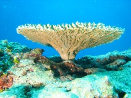 g_07965c_WP_-FFS_Table_bottom - The wonderful world of coral reefs  - Science and Research